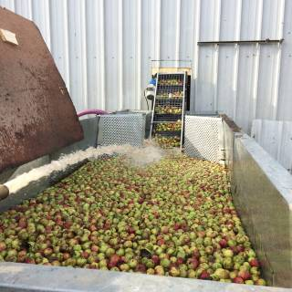 Premium natural cider go into Stonewell Cider's quality craft ciders