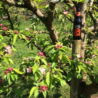 Stonewell Cider's quality cider is made with pride in Cork, Ireland