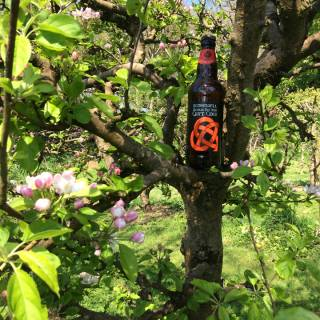 Stonewell Cider - traditional Irish craft cider made with pride in County Cork