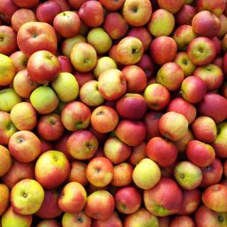 Jonagored apples to make quality Irish cider by Stonewell Cider in Cork