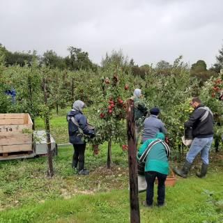 Stonewell Apple Picking